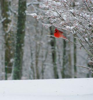 winter, birds