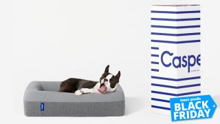 Black Friday mattress deal: Casper dog bed