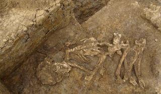 Skeletons and mummies