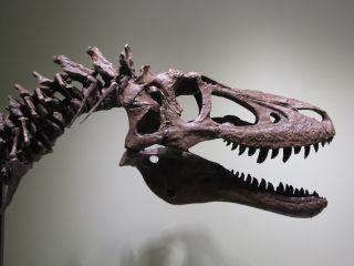 T. Rex cast