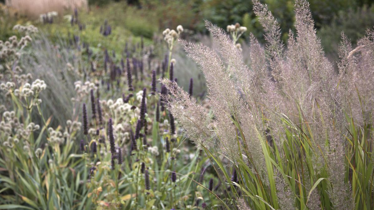 6 ways to use ornamental grasses in your garden