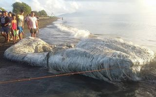 Sea monster in Philippines