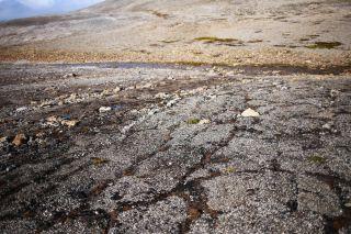 Svalbard permafrost