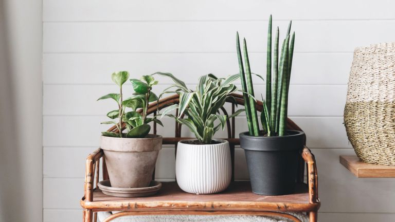 looking after house plants