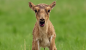 Planet Earth 2 Gets Disturbingly Ridiculous When Animals Scream Like Humans In This Video