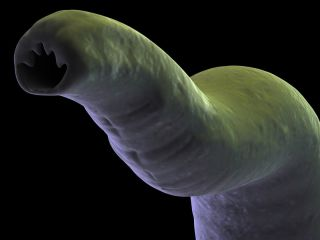 a close-up image of a hookworm