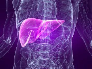 Virus Kills Cancer Cells   Oncolytic Viruses   Live Science