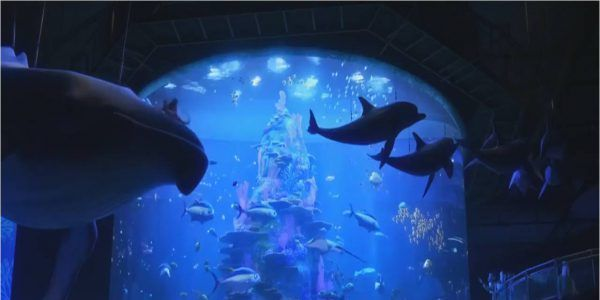Finding Dory Aquarium