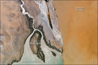 colorado river detla, man-made flooding