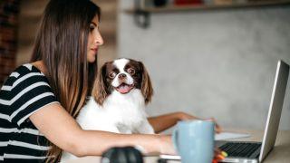 Pet insurance advice