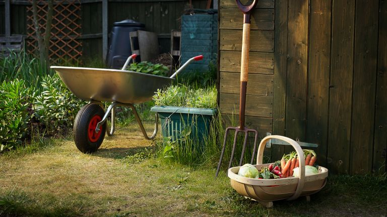home grown veg and garden shed with tools