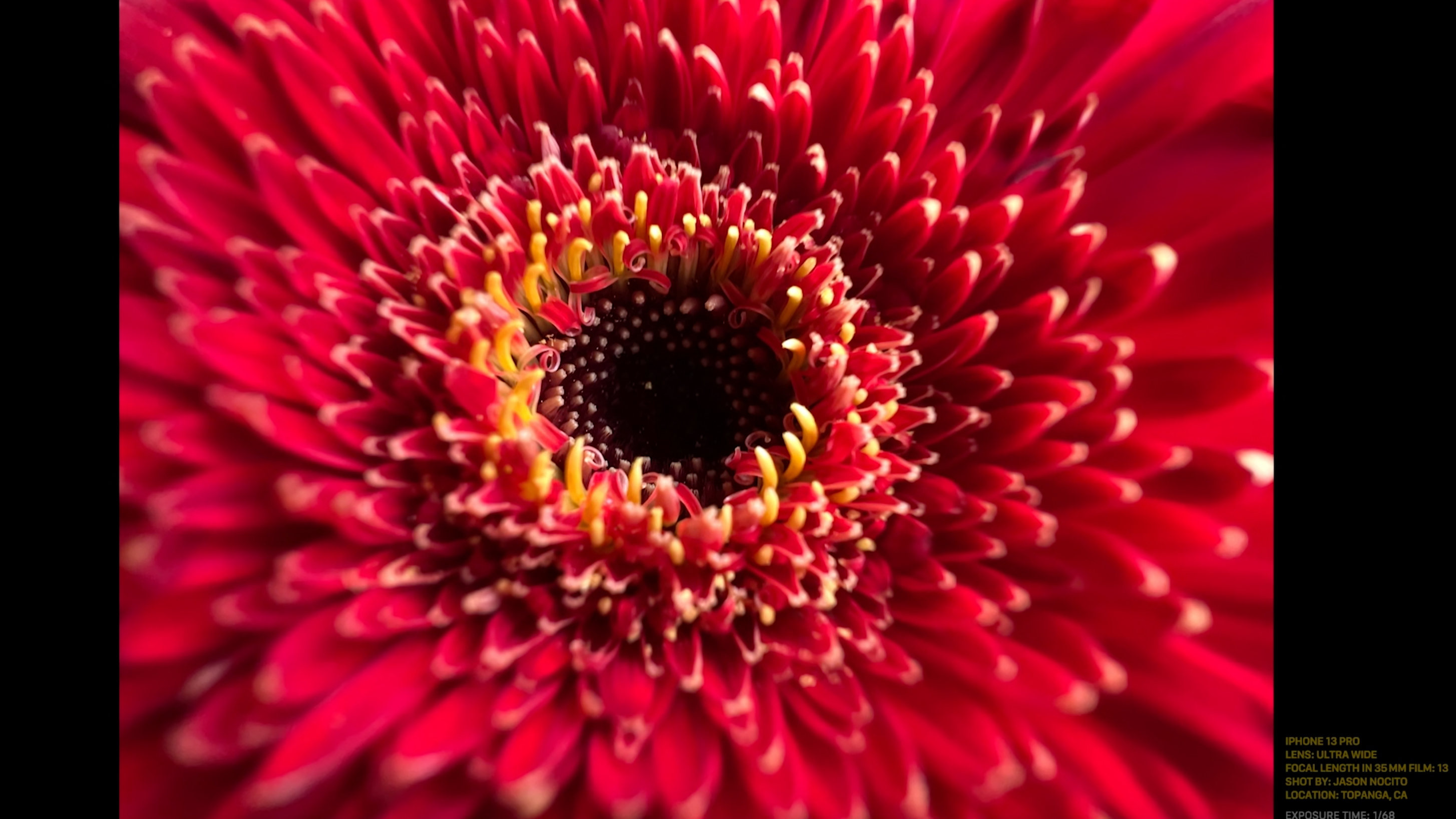 A macro photo of a red flower shot with the iPhone 13 Pro's macro lens