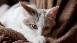 cat losing weight: causes and treatment