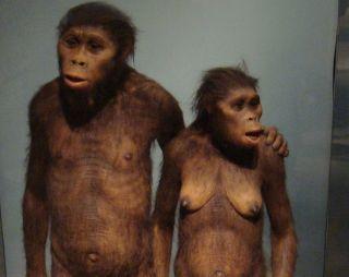 human, humanoid, hominid, ancient human, human ancestor, Australopithecus afarensis, walking, bipedalism