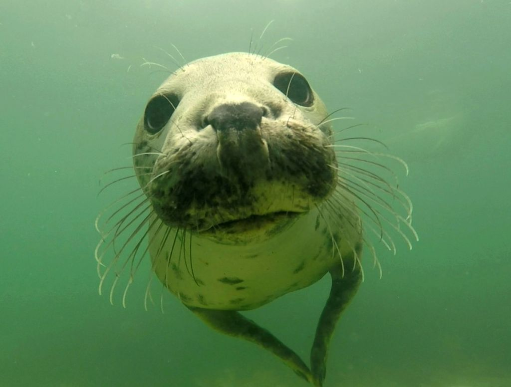 Seal caught clapping underwater … and scientists flip out CKf8r4ig2MMwUjh8pXMYQR-1024-80