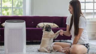 Are air purifiers safe for pets: picture of dog, owner and air purifier