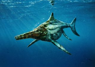 Scottish Ichthyosaur