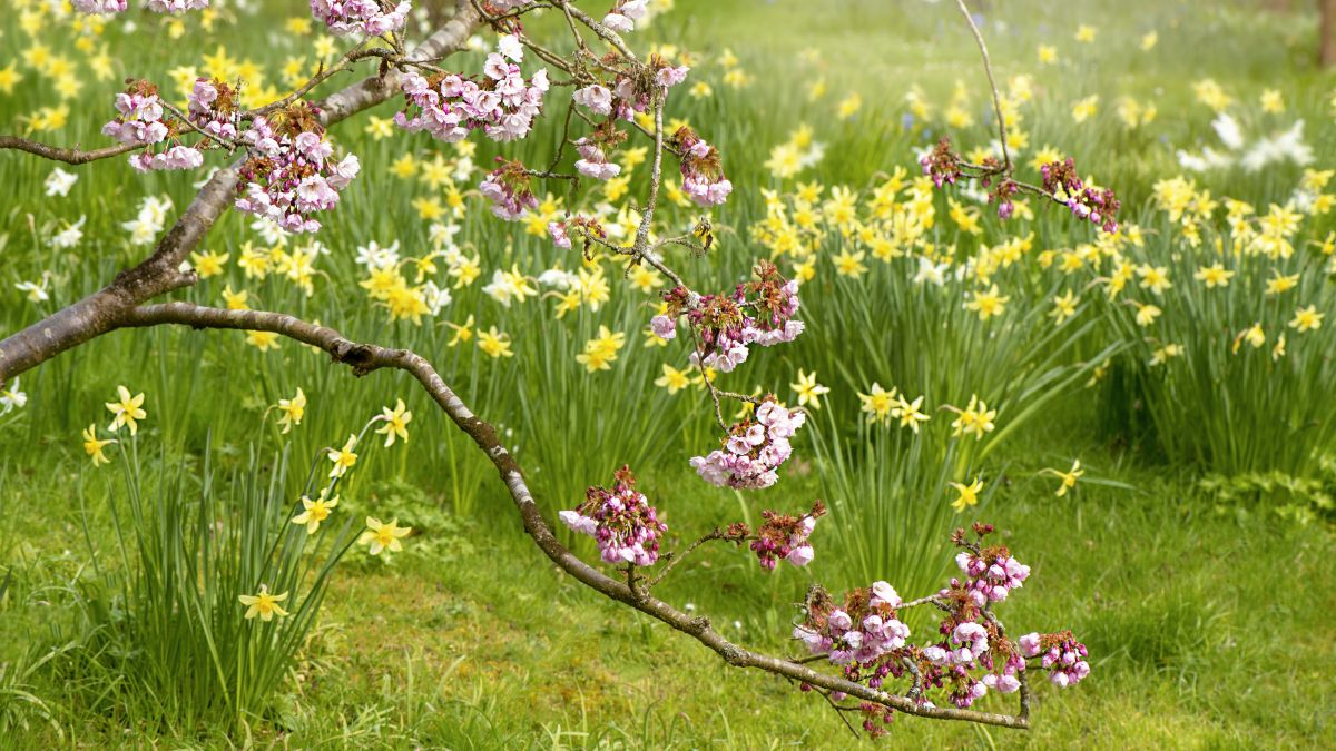 The one thing you shouldn't do with bulbs planted in grass, according to Monty Don