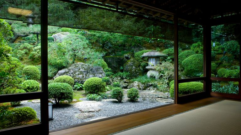small Japanese garden ideas: outdoor plot with clipped topiary