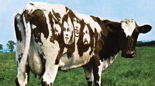 Friesian cow from the cover of Pink Floyd's Atom Heart Mother album