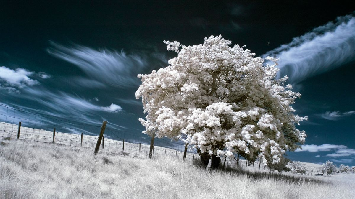 The best infrared filter in 2020: create surreal images in color and black & white