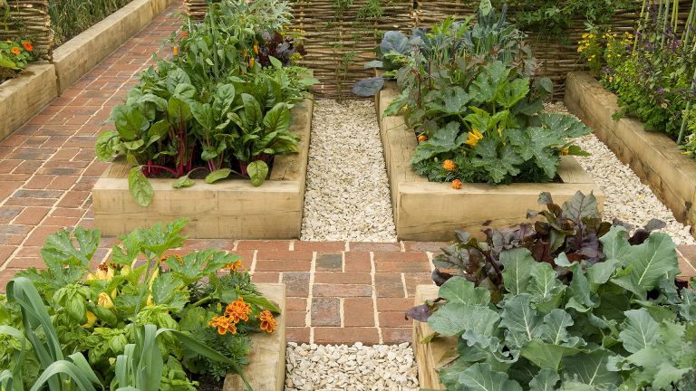 Raised garden beds used as garden design feature
