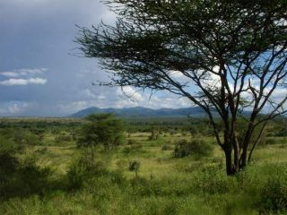 The spread of grassland, like this modern savanna in East Africa, may have set the stage for our ancestors to evolve distinctly human traits.