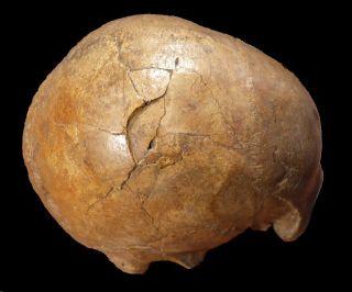 Paleolithic Skull