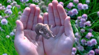 Magic Leap elephant