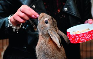The last programme in the series sees an aggressive rabbit receive attention from the Nightmare Pets SOS team