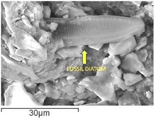 diatom-meteorite