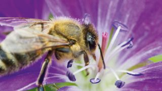 This synthetic skin can detect a bee landing on it