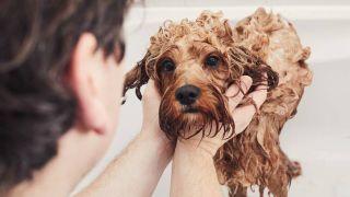 dog bath grooming