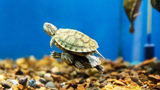 best turtle aquariums