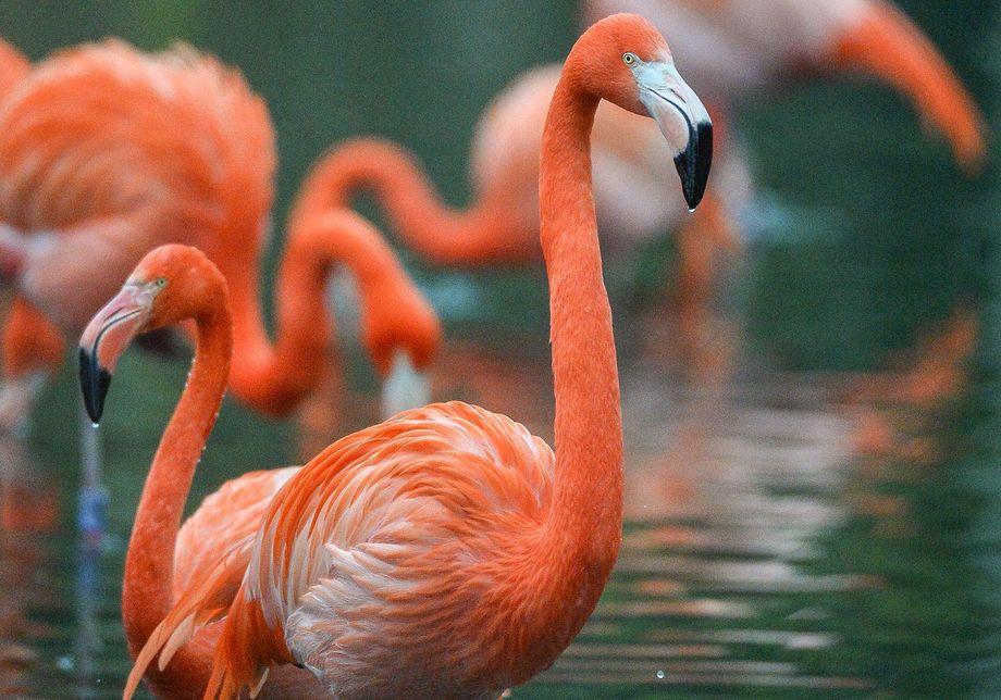 Flamingo The Secret Life of the Zoo