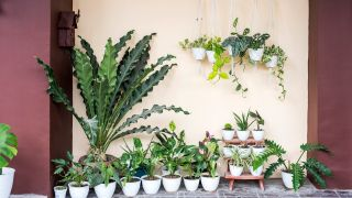 Small backyard ideas: image of lots of potted plants in various sizes