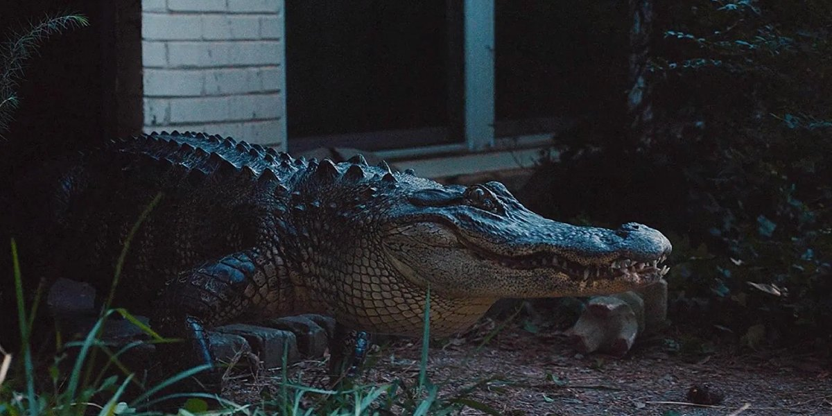 The Alligator Man's alligator on Atlanta