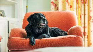signs your dog is getting old