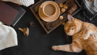 A ginger cat relaxing with a cup of tea