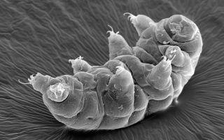 To a tardigrade, our colorful world may be a drab black-and-white.