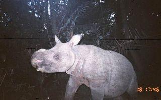 One of the elusive baby rhinos.