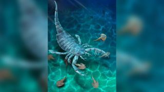 The sea scorpion was the apex predator of its time.
