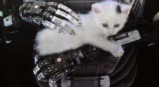 The Talos Principle kitten