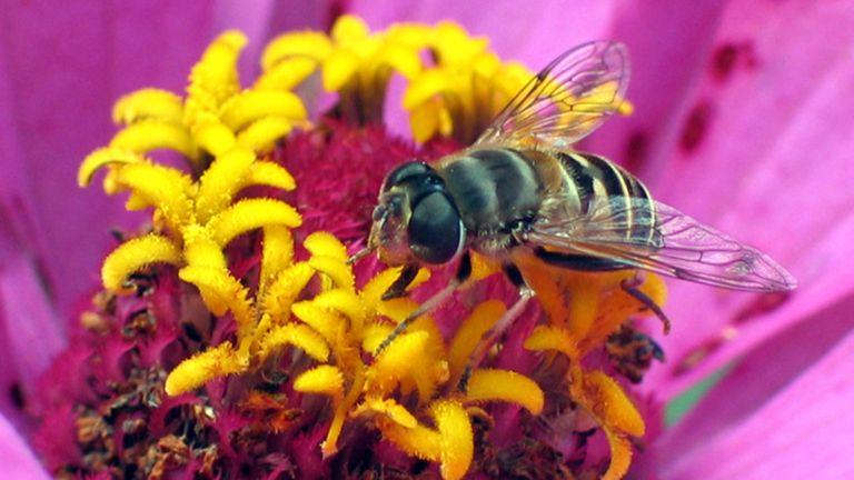 Beginner beekeeping: Bee on a flower