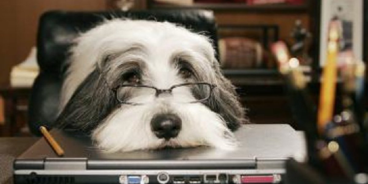Tim Allen's version of The Shaggy Dog in the film - cute glasses included.