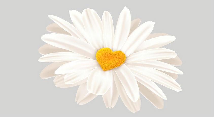 Illustration of daisy