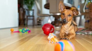 how to make a dog play area at home