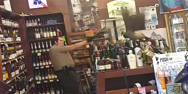 Peacock breaking stuff