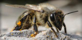 honey bee decision-making skills