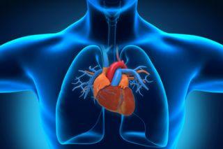 Image of human heart